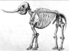 mastadon skeleton